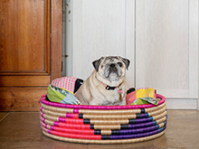 Madcap Vertical Client Story Happy Bulldog Sitting in Colorful Dog Bed