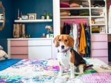 Dog sitting on bed in front of white and pink cabinet for Justine Ma