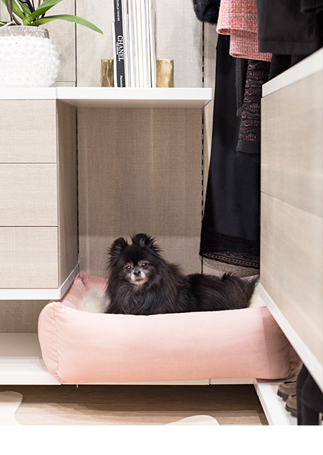 dog on dog bed inside custom closet for Jude Miyashiro | California Closets
